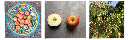 3-pommes2
