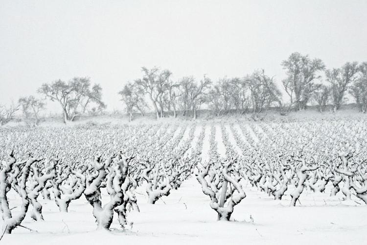 vigne-sous-la-neige-1397279459-1198561