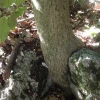 manger-pleine-conscience-arbre